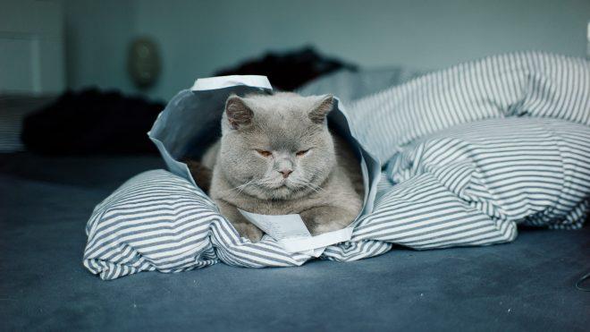 Katinas dovanų maiše